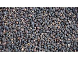 Bez dziki owoc (sambulus ebulus ) - 200g